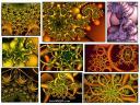 fresh_fractals_chaos_3.jpg